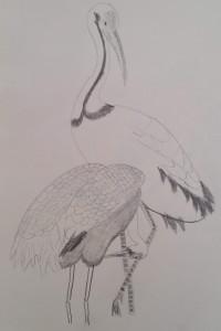 CranesSketch