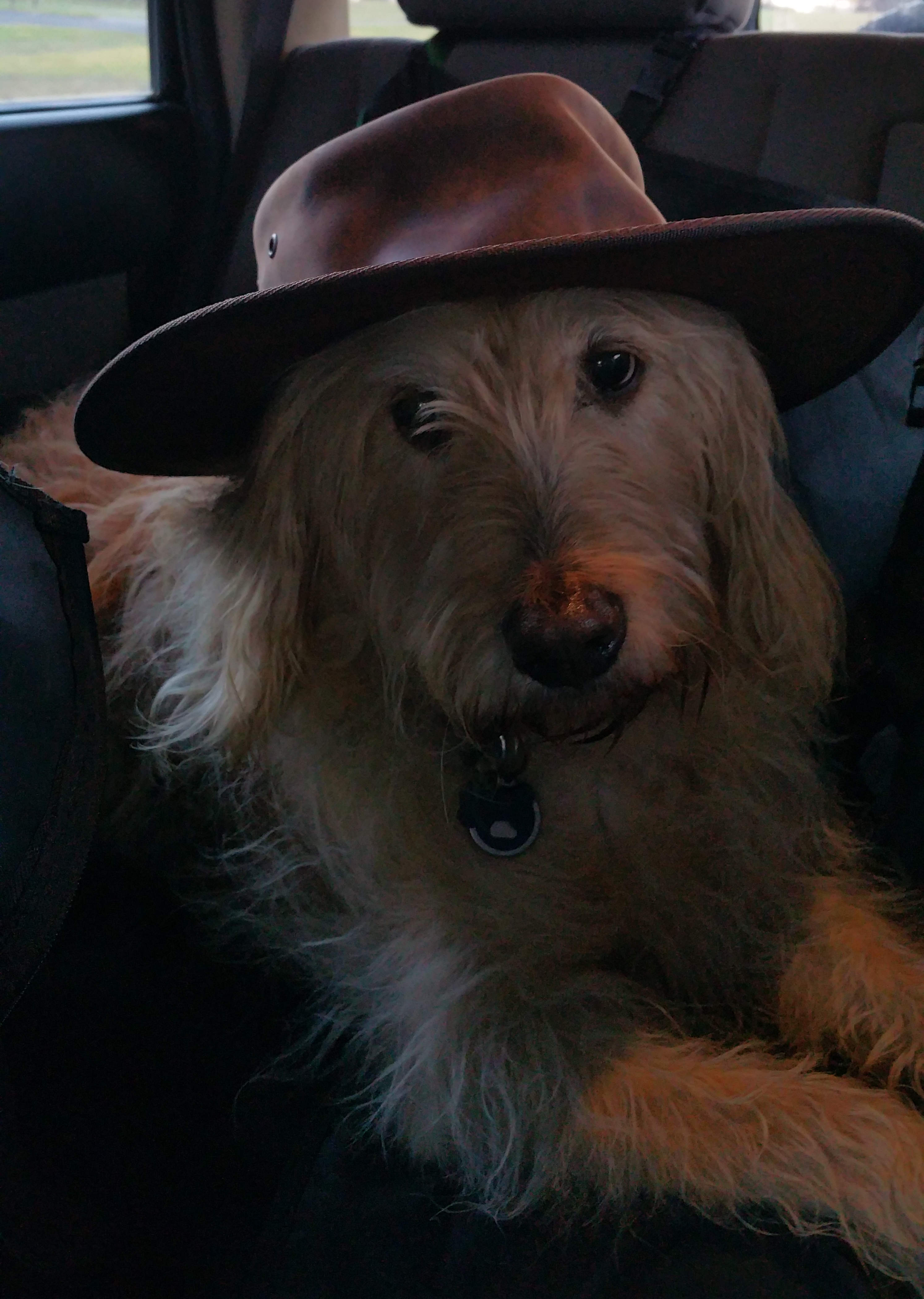 Even Pip has taken a shine to the hat
