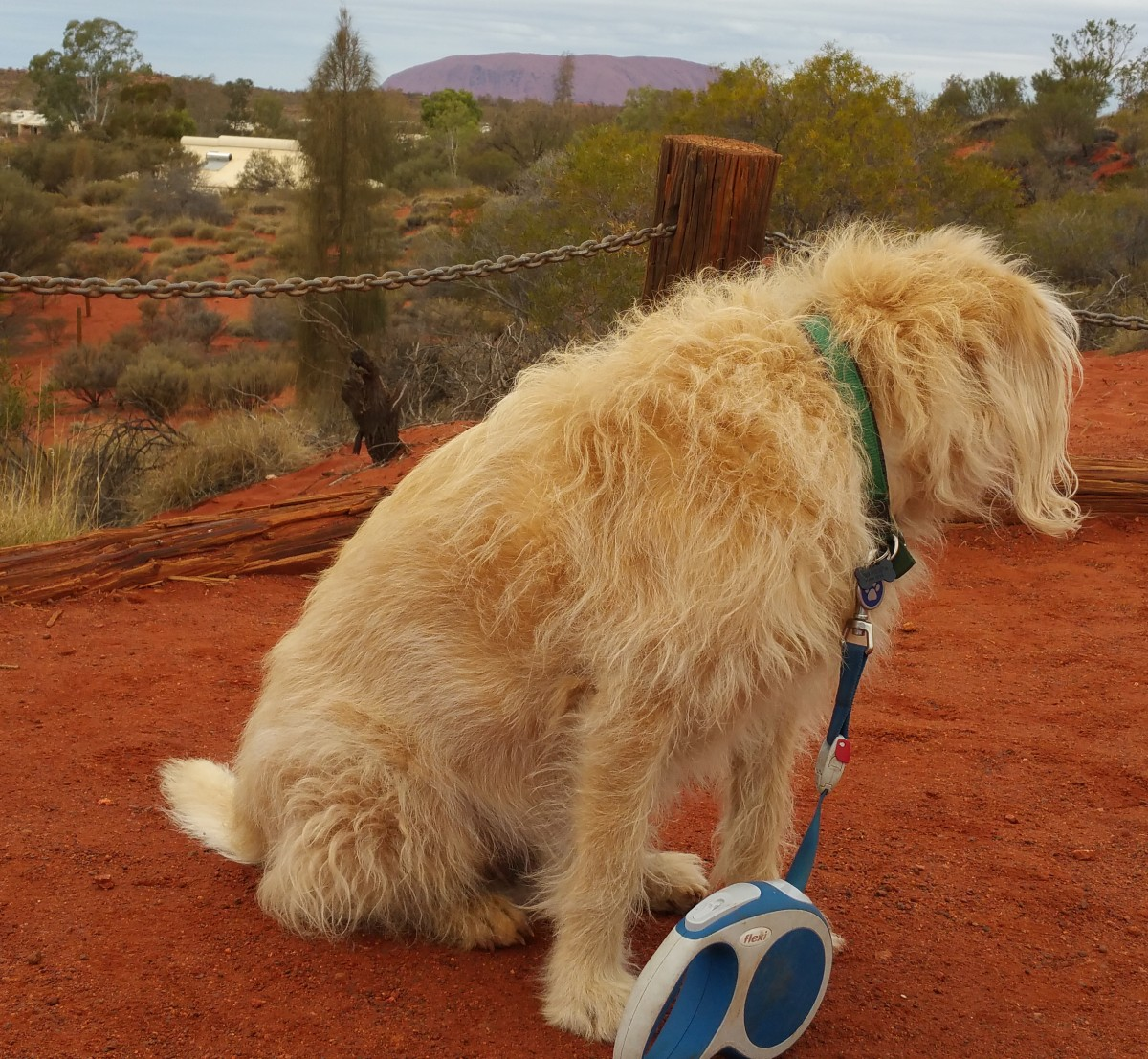 As close as Dog can get to Uluru