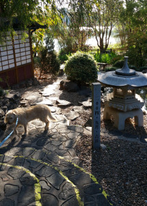 "Dog says ""More Japanese Gardens?"""