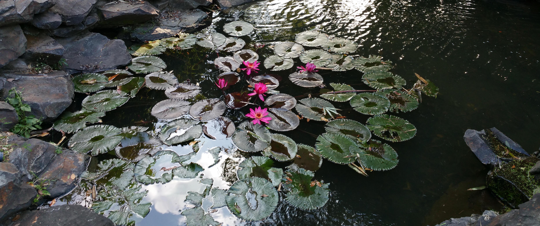 A small Japanese Garden is a good Japanese Garden!