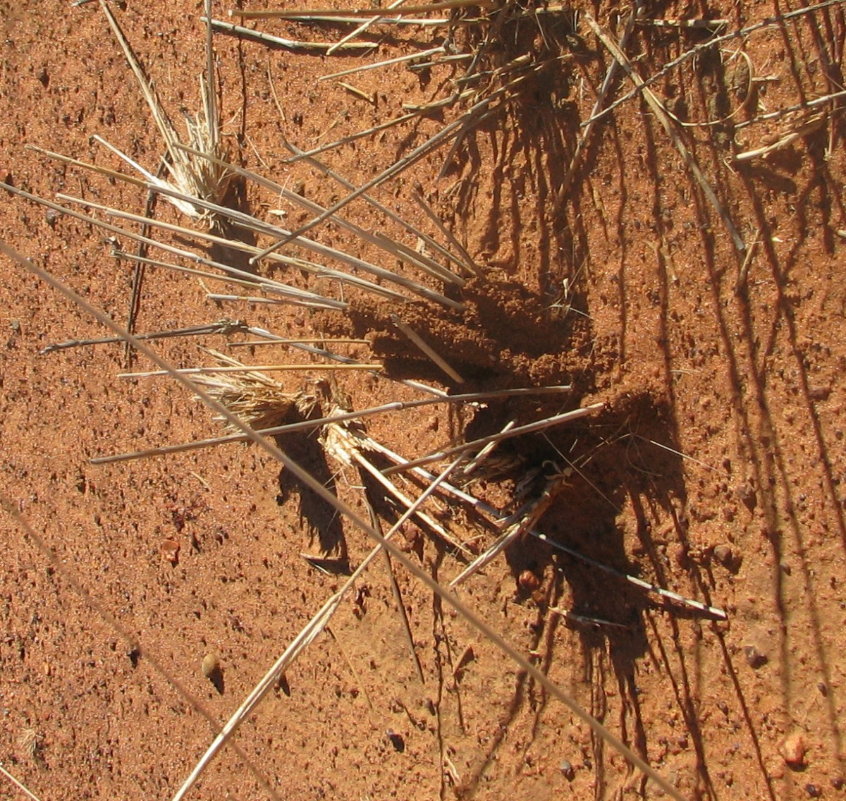 The termite mound starts on a piece of grass