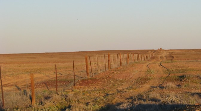 Longest fence in the world?
