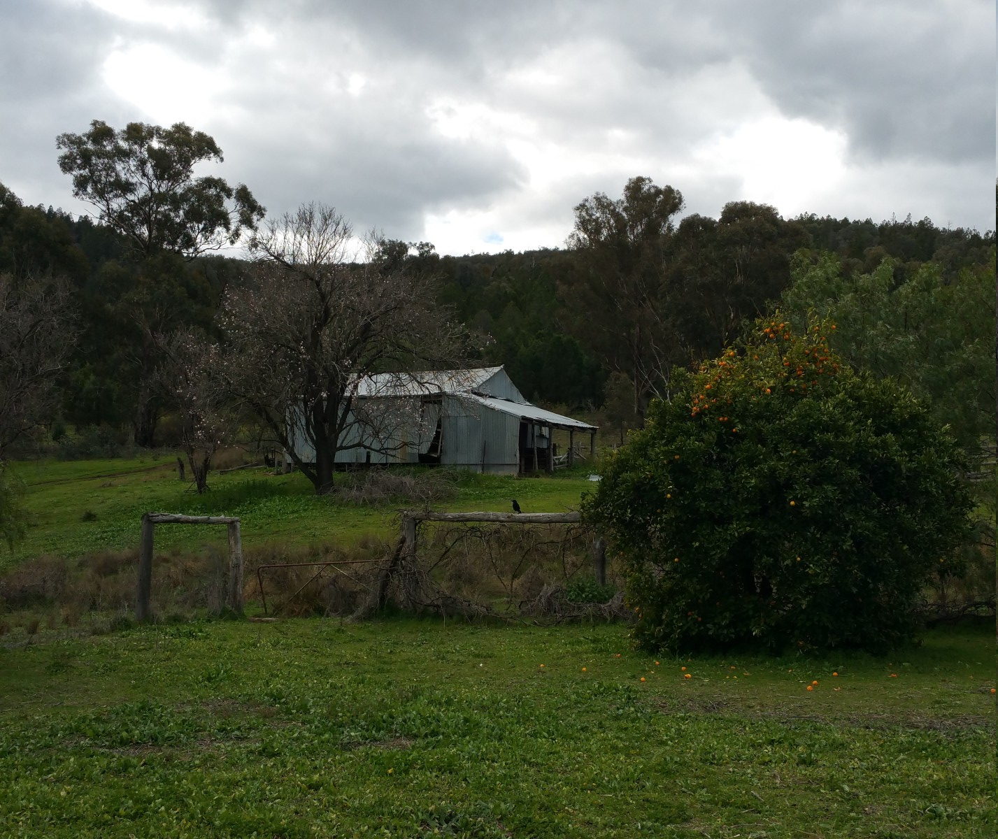 View of the shearing shed from the old homestead